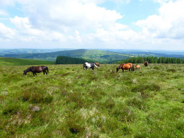 Moorland, ponies and woodland above Heathercombe