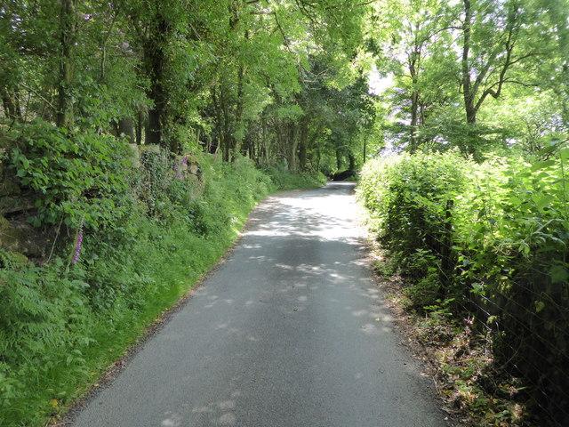 Lane near Pitton