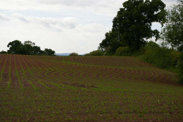 Newly-sown field off Wood Orchard Lane, Kinsey Heath