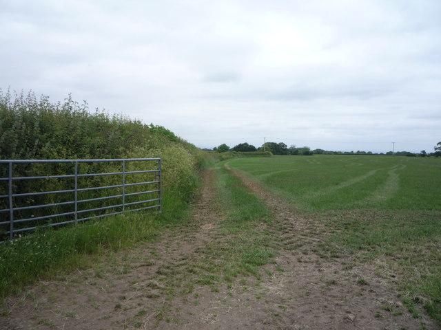 Farm track near Quarry Gill