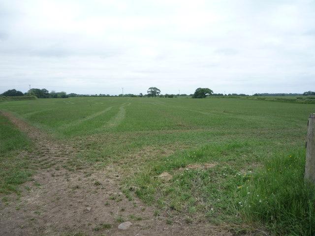 Grassland near Quarry Gill