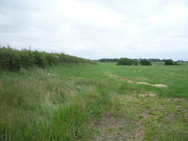 Grazing and hedgerow near Little Bampton