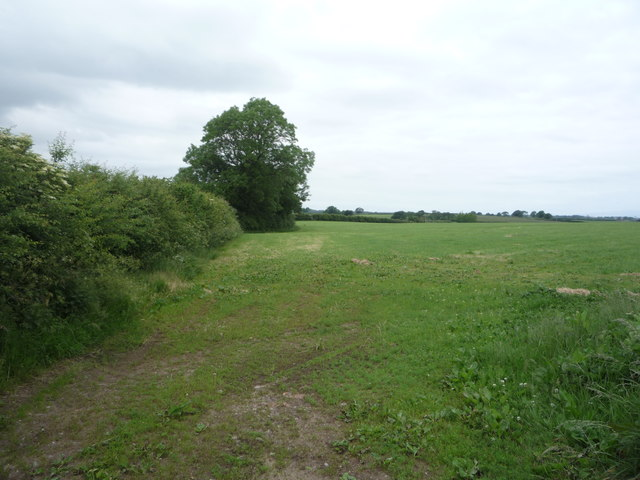Grazing and hedgerow west of Aikton
