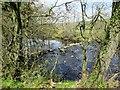 SE2060 : Stepping  Stones  over  River  Nidd by Martin Dawes