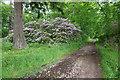 NJ0254 : Track on the Altyre Estate by valenta
