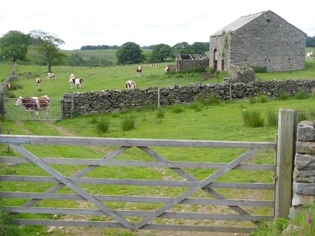 Barn and cattle below Knock Pike