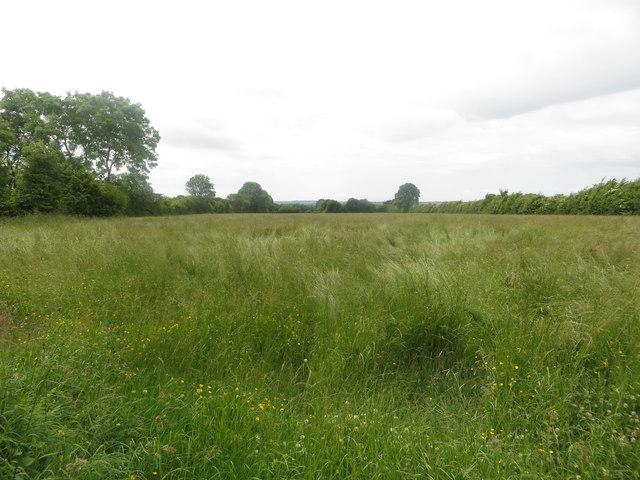 Grassland south of Gilcrux