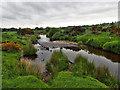 NY3633 : River Caldew by Mick Garratt