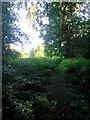 SZ0796 : Kinson: footpath E46 through Duke's Coppice by Chris Downer