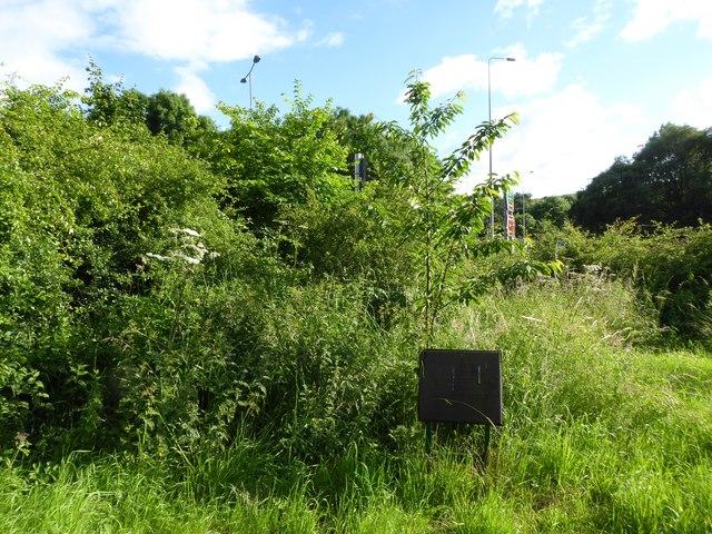 Ferndown LNR: Diamond Jubilee trees