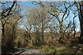 SX1264 : Lane into Drift Wood by Derek Harper