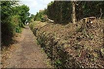 SX9065 : Clearance near Chapel Hill Pleasure Grounds by Derek Harper