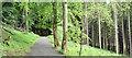 J4477 : Path, Cairn Wood, Craigantlet (June 2016) by Albert Bridge
