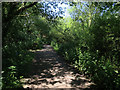 TF7543 : Path to the visitor centre, Titchwell RSPB by Hugh Venables