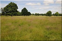 SJ5409 : Attingham Park by Philip Halling