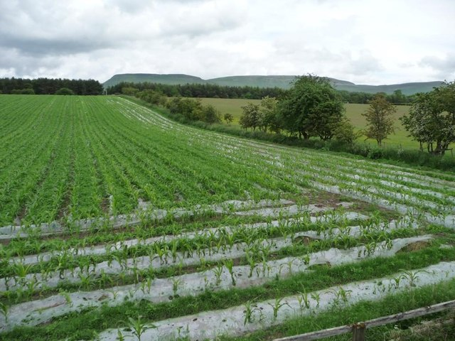 Corner of arable field, north of Sandford Mire