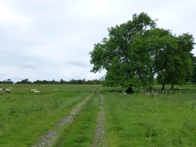 Track near Elf Hills