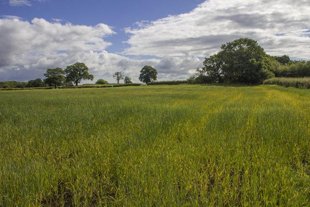Crop fields, Park Eyton