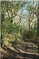 SX1256 : Footpath, West Wood by Derek Harper