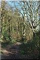 SX1256 : Footpath in West Wood by Derek Harper