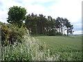 NT9342 : Woodland near Duddo by JThomas
