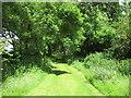 SE8958 : Green Lane by Jonathan Thacker