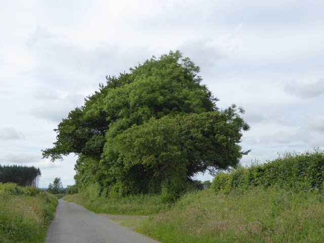 Trees and a field entrance south of Upcott Cross