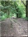 SE1228 : Shelf Woods by Ruth