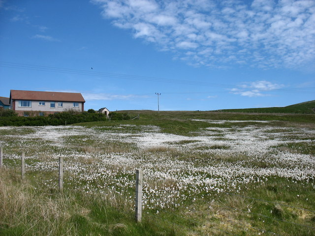 A field at Marrister, Whalsay