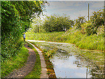 SD7909 : Manchester, Bolton and Bury Canal Towpath near to Fishpool by David Dixon
