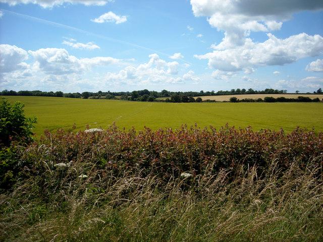 Arable fields opposite Field Barn