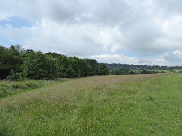 Field and wood near Clayton