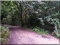 SZ0793 : Talbot Village: footpath N12 turns left while N13 goes ahead by Chris Downer