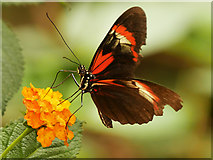 SJ4170 : Chester Zoo, Inside the Butterfly House by David Dixon