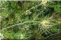 SX9065 : Raindrops on Nigella by Derek Harper