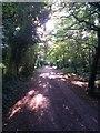 SZ0793 : Talbot Village: footpath N11 heads west by Chris Downer