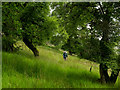 NY4025 : Trees growing from thick grass by Trevor Littlewood