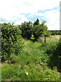 TL9484 : Footpath to West Harling Road by Adrian Cable