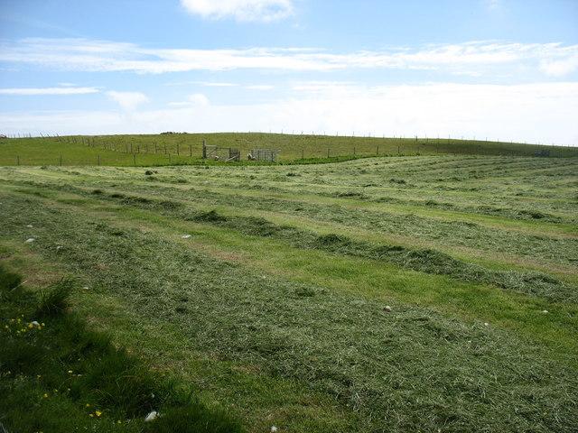 Drying the hay at Gord Farm