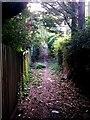SZ0795 : East Howe: down and up again on footpath U40 by Chris Downer