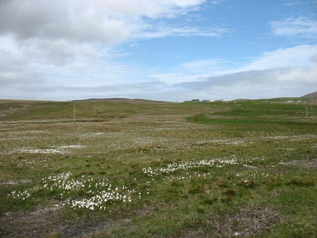 Fields below Assater