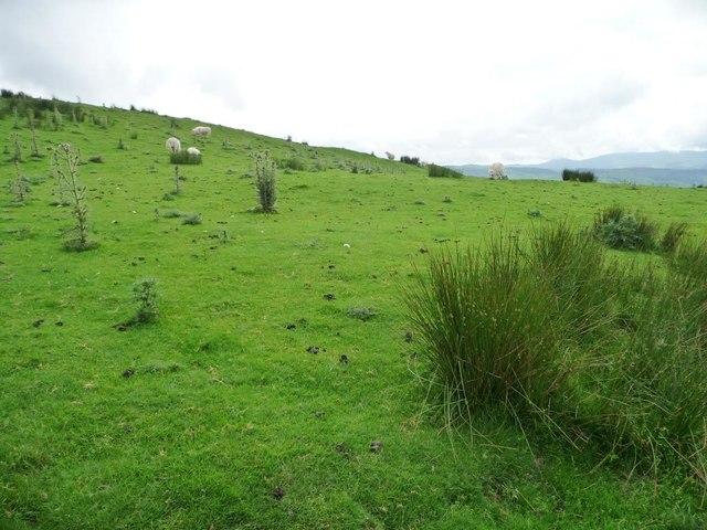 Rough grazing above Rhiw Fawr