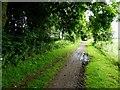 TA1538 : Hornsea Rail Trail #12 by Steve  Fareham