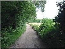 TQ8554 : Pilgrims Way, near Hollingbourne by Chris Whippet