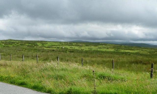 Moorland sheep under grey skies, near Lluest Dropyns
