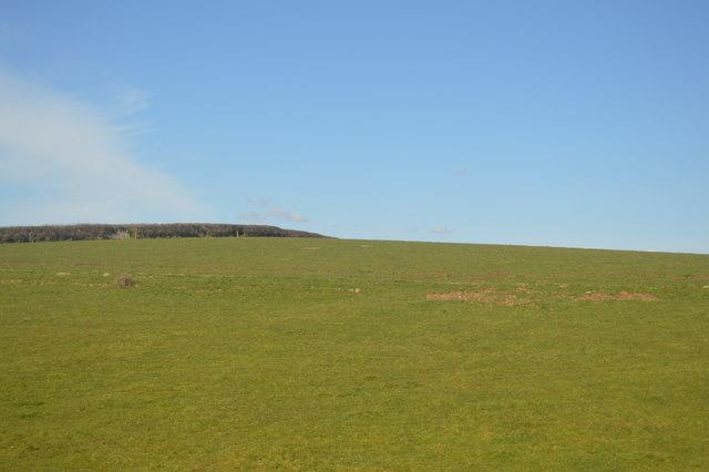 Devon grassland