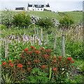 HT9738 : Ham and its kale yard, Foula by Julian Paren