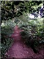 SZ1095 : Muscliff: under some holly on footpath M17 by Chris Downer