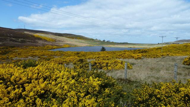 Loch Mor through the gorse