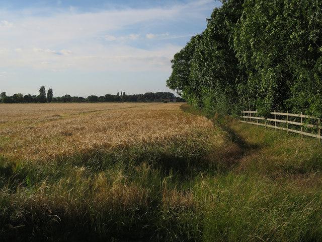 Barley by the Motorway